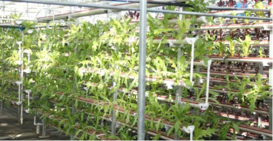 吉尔吉斯斯坦蔬菜大棚可行性研究报告